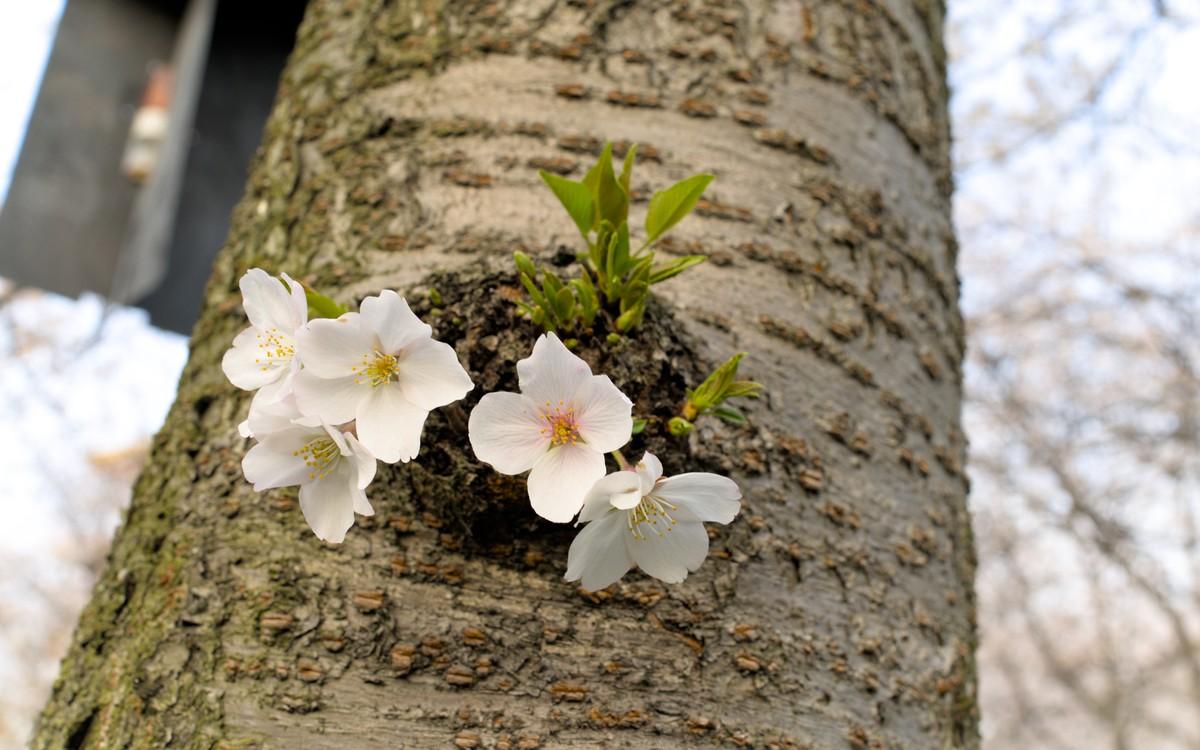 spring in wuhan